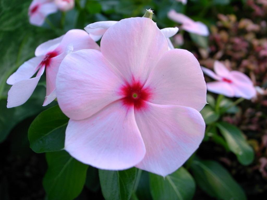 駅の花壇の花