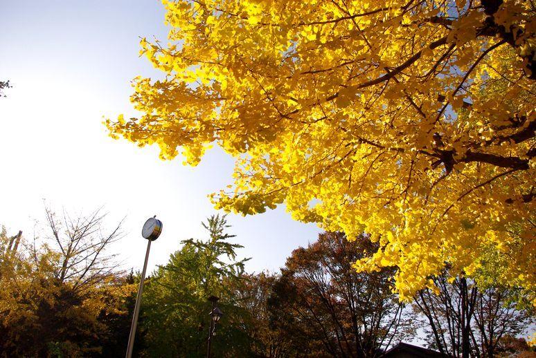 金色の公園