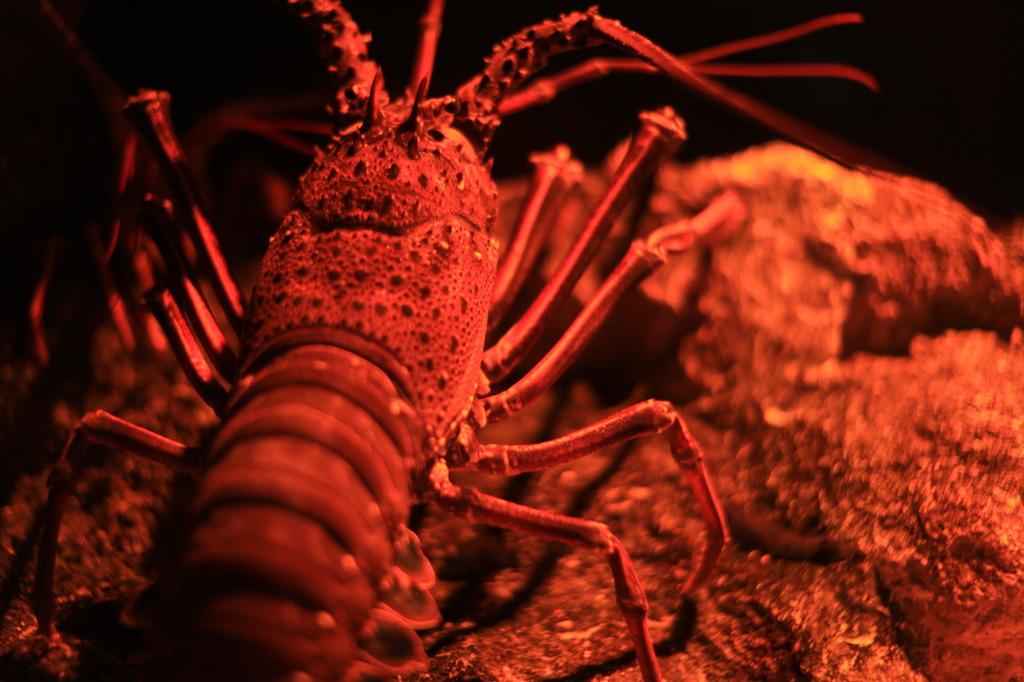 甲殻の陰影