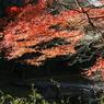 SONY DSLR-A100で撮影した風景(嵐山渓谷 ~冠水橋と紅葉~)の写真(画像)