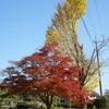 秋 ~赤・緑・黄~