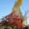 SONY DSLR-A100で撮影した風景(秋 ~赤・緑・黄~)の写真(画像)
