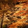 SONY DSLR-A100で撮影した風景(紅葉 ~圧巻~)の写真(画像)
