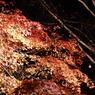 SONY DSLR-A100で撮影した風景(赤い波)の写真(画像)