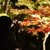 京都 永観堂 紅葉を撮影