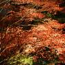 SONY DSLR-A100で撮影した風景(東郷公園ライトアップ ~ 紅 くれない ~)の写真(画像)