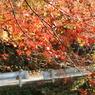 SONY DSLR-A100で撮影した風景(鎌北湖 ~秋本番~)の写真(画像)