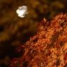 SONY DSLR-A100で撮影した風景(紅葉 ~月夜~)の写真(画像)