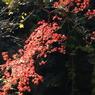SONY DSLR-A100で撮影した風景(嵐山渓谷 ~赤く降り注ぐ~)の写真(画像)