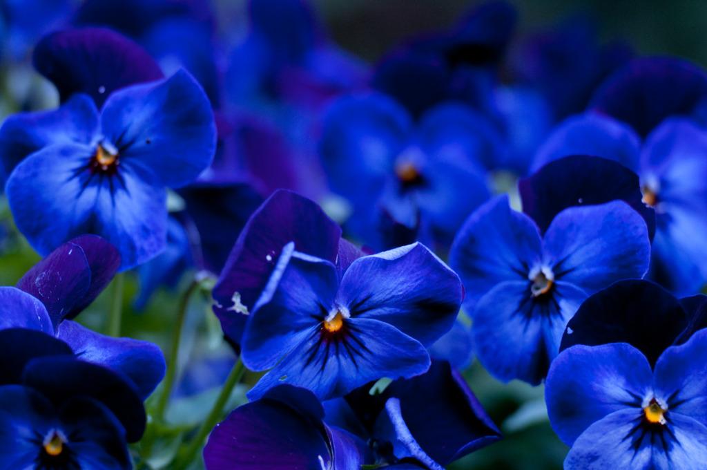 庭で咲いてた花 1