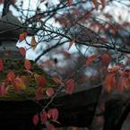 NIKON NIKON D300Sで撮影した(善光寺の朝 #24)の写真(画像)