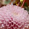 めでたい席の飾り花