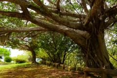大きな樹の下で