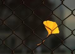 落ち葉の休憩