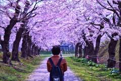 函館 五稜郭 桜 6