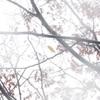 雨の日の白