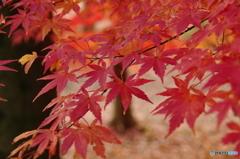 井頭公園の紅葉