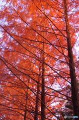 井頭公園の紅葉Ⅱ
