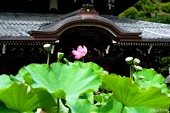 蓮&神社〜4