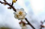 春、もうちょっと、、、
