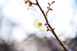 春、もう少し、、、