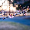 春よ、来い