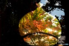 栗の中の紅葉