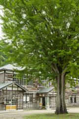 学び舎の守り木
