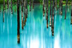 早朝フォトライフ 青い池#3