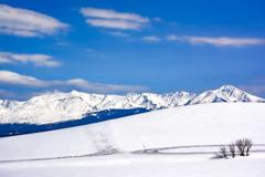 雪解け前の美瑛の丘