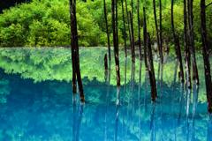 早朝フォトライフ 青い池#2
