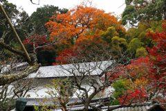 東慶寺の紅葉1