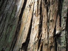 山形立石寺「木漏れ陽➁」
