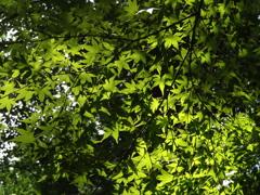 山形立石寺「木漏れ陽①」