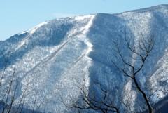 残雪・昇龍型