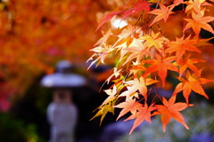 紅葉・諸戸庭園
