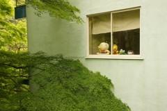 窓辺の新緑