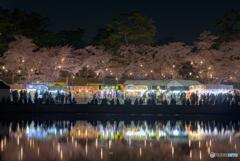 岡崎公園 夜桜 (6)