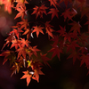 秋を切り取る #6