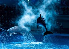 イルカと私と新レンズ♪