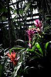 温室の花0038