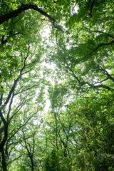 新緑の陣が下渓谷公園