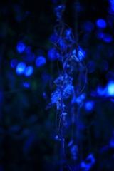 自然のillumination