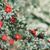 二月の赤❷