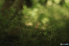 森の中で深呼吸した朝