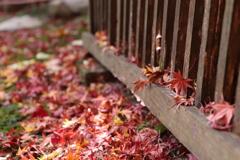 晩秋の鮮やかさ ❶
