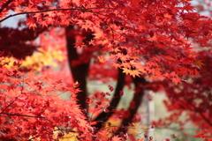 晩秋の鮮やかさ ❸