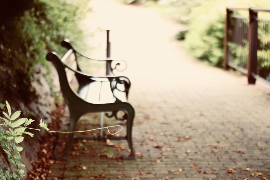 ベンチのある風景  秋①