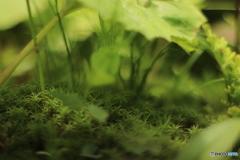 苔の緑が好き