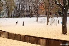 雪の北大 3